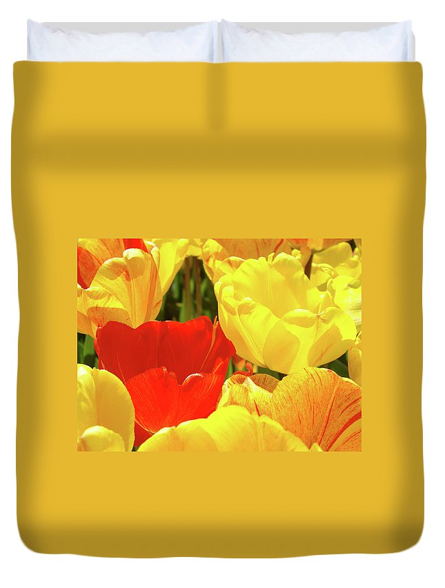 Tulip Duvet Cover featuring the photograph Yellow Red Tulip Flowers Art Prints Baslee Trouman by Baslee Troutman