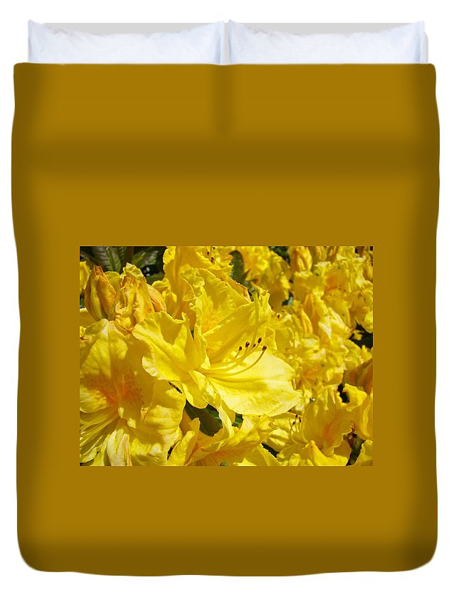 Rhodies Duvet Cover featuring the photograph Yellow Rhodies Floral Brilliant Sunny Rhododendrons Baslee Troutman by Baslee Troutman