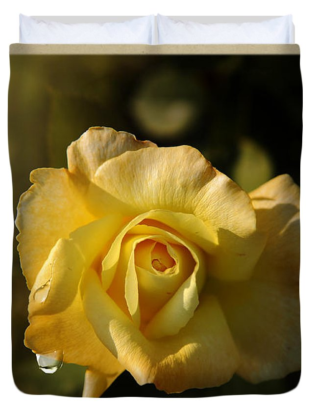 Rose Duvet Cover featuring the photograph Yellow Rose In Bloom by Stefano Senise