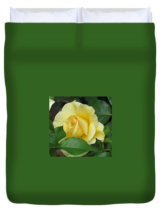 Perfect Duvet Cover featuring the photograph Yellow Rose by Shelley Wilson