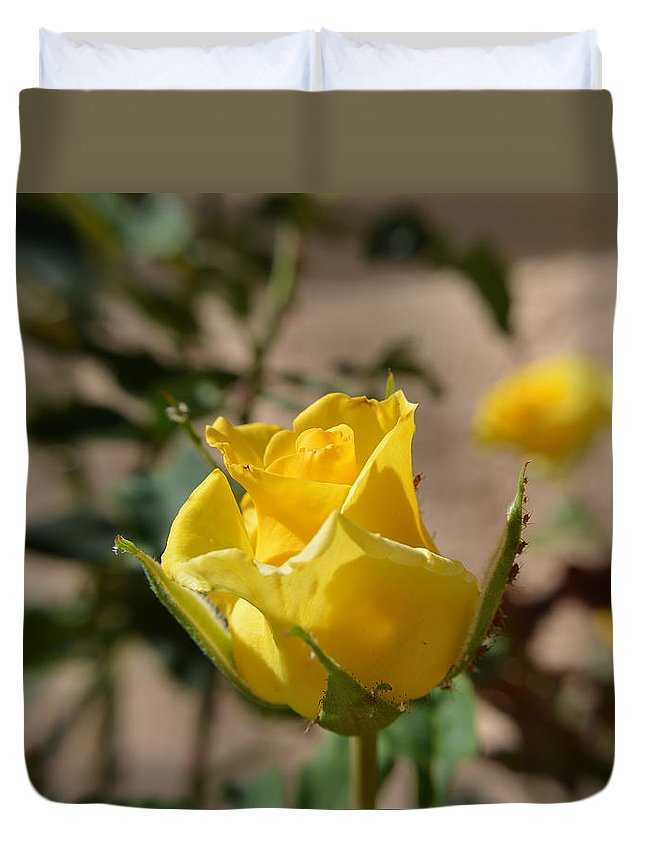 Rose Duvet Cover featuring the photograph Yellow Rose With Ants by Aimee L Maher ALM GALLERY