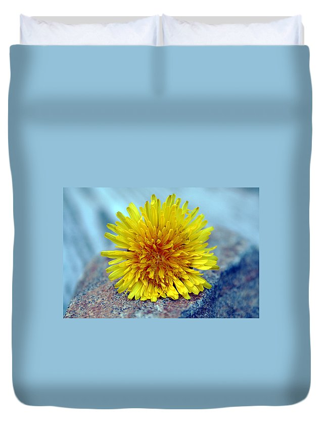 Flower Wild Nature Yellow Rock Blue Spring Macro Close Up Duvet Cover featuring the photograph Yellow Spring by Linda Sannuti