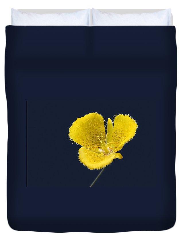 Mariposa Duvet Covers