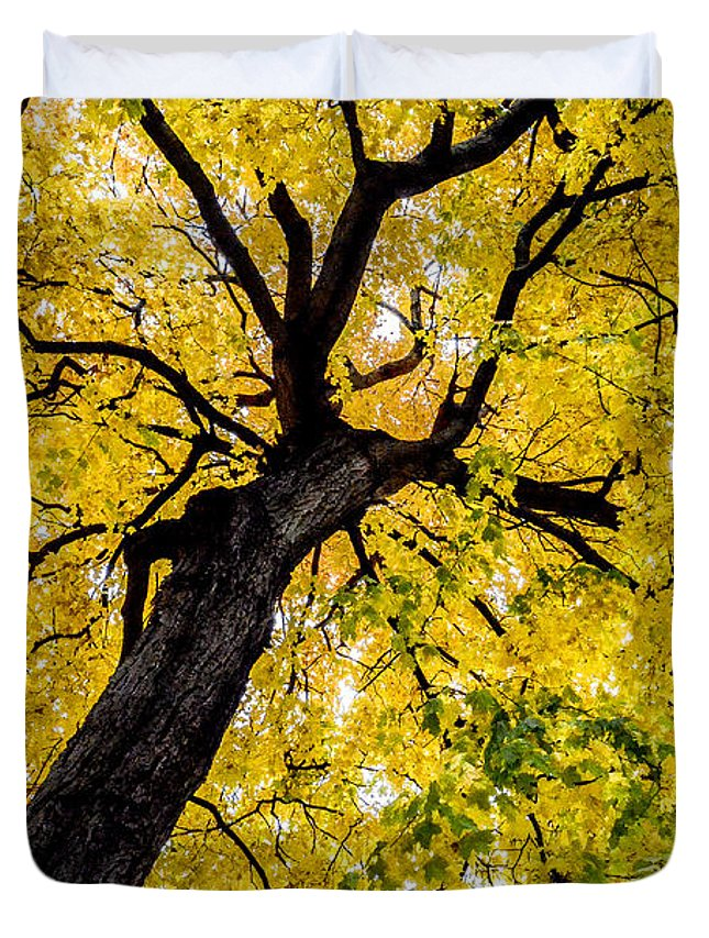 Tree Duvet Cover featuring the photograph Yellow Tree by Michael Cummiskey