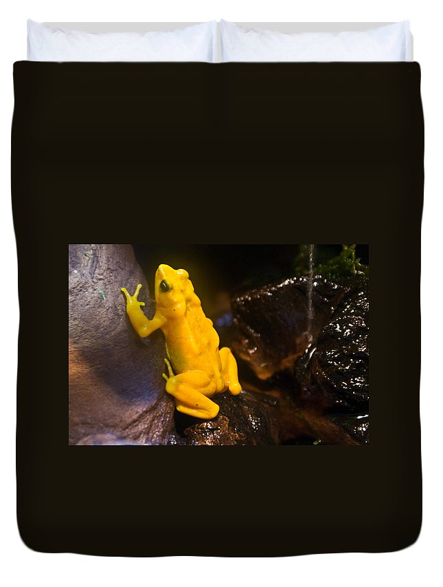 Frog Duvet Cover featuring the photograph Yellow Tropical Frog by Douglas Barnett