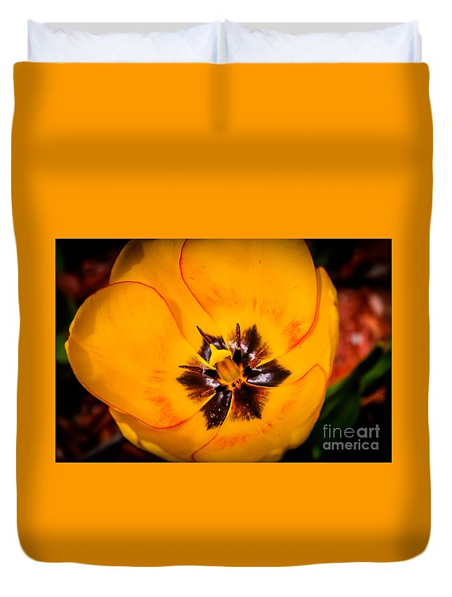 Spring Floral Duvet Cover featuring the photograph Yellow Tulip - Close Up by Claudia M Photography