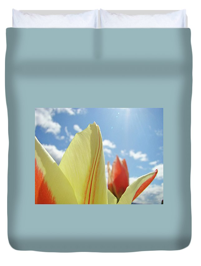 Tulip Duvet Cover featuring the photograph Yellow Tulip Flower Art Prints Spring Blue Sky Clouds Baslee Troutman by Baslee Troutman