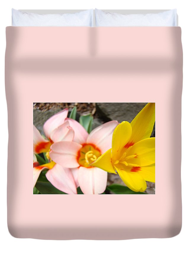 Tulip Duvet Cover featuring the photograph Yellow Tulips Art Prints Pink Tulips Spring Florals Baslee Troutman by Baslee Troutman