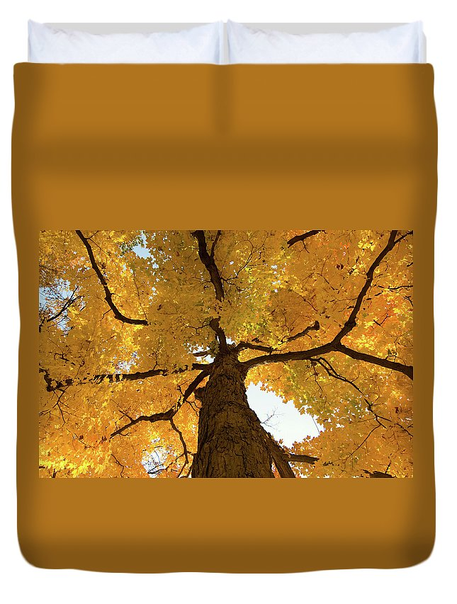 Maple Duvet Cover featuring the photograph Yellow Up by Steve Stuller