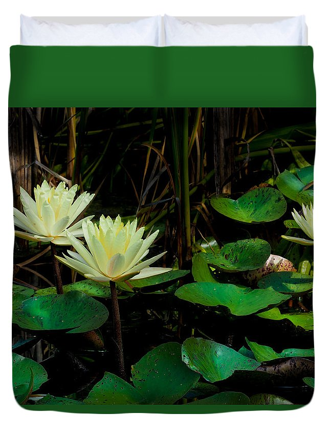 Yellow Lily Duvet Cover featuring the photograph Yellow Water Lilies by Paula Ponath