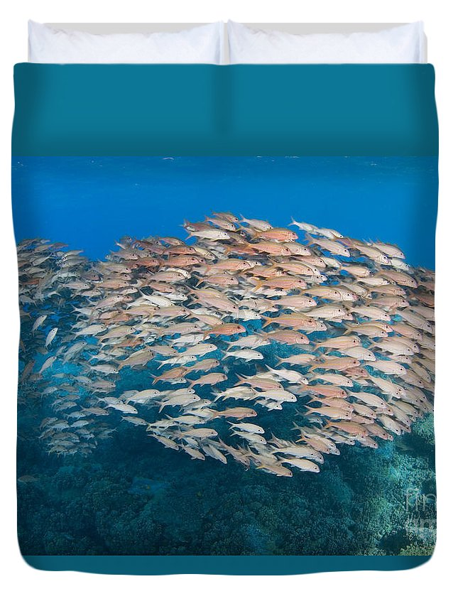 Animal Art Duvet Cover featuring the photograph Yellowfin Goatfish by Dave Fleetham - Printscapes