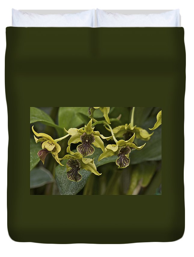 Orange Duvet Cover featuring the photograph Yellowish Orchids by Michael Peychich