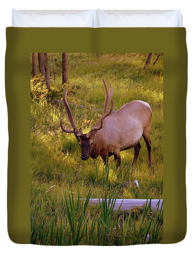 Elk Duvet Cover featuring the photograph Yellowstone Bull by Marty Koch