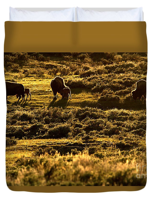 Bison Duvet Cover featuring the photograph Yellowstone Sunset Graze by Adam Jewell