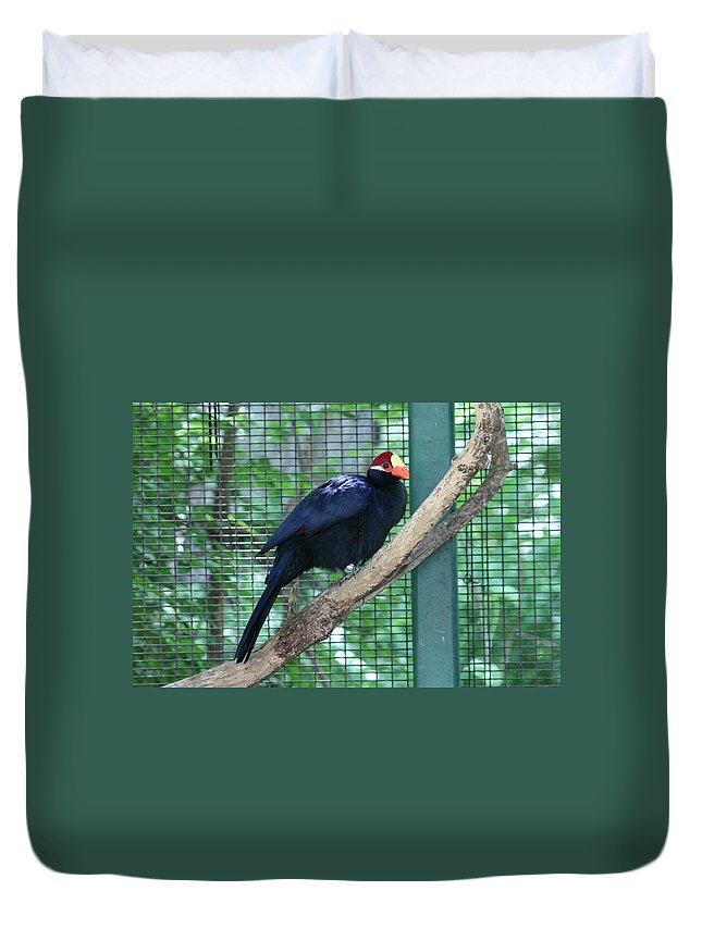 Bird Duvet Cover featuring the photograph You Are My Audience - Bird Perched by Lynn Michelle