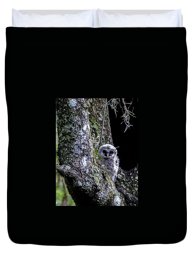 Barred Owl Duvet Cover featuring the photograph You Guys Still Here? by Norman Johnson