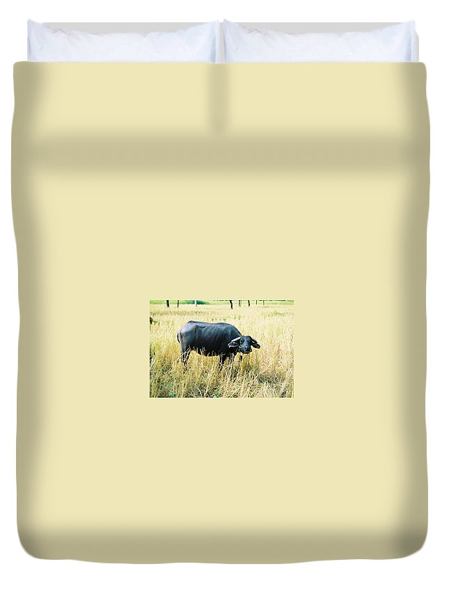 Water Buffalo Duvet Cover featuring the photograph You Lookin At Me by Mary Rogers
