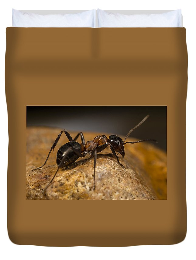 Ant Duvet Cover featuring the photograph You Lookin' At Me? by Terry Leasa