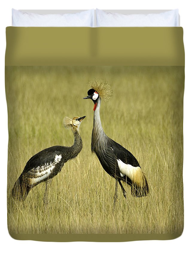 Africa Duvet Cover featuring the photograph You Must Be My Mother by Michele Burgess