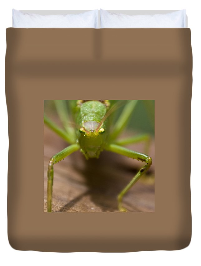 Katydid Duvet Cover featuring the photograph You Said What by Douglas Barnett