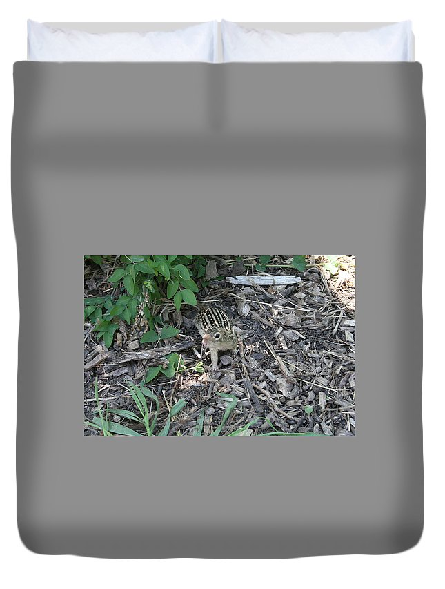 Ground Squirrel Duvet Cover featuring the photograph You There - Ground Squirrel by Lynn Michelle