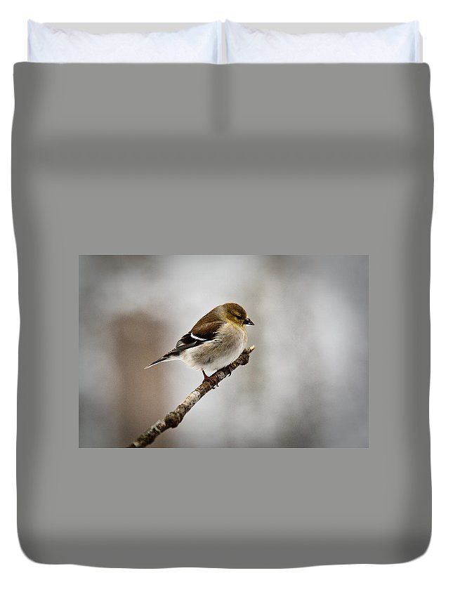 Cove Duvet Cover featuring the photograph Young American Golden Finch 1 by Douglas Barnett