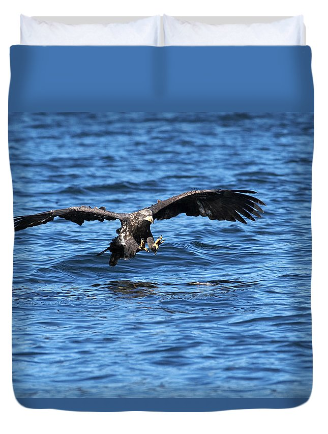 Bald Eagle Duvet Cover featuring the photograph Young Bald Eagle I by Randall Ingalls