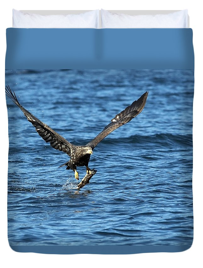 Bald Eagle Duvet Cover featuring the photograph Young Bald Eagle II by Randall Ingalls