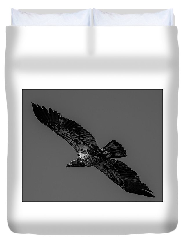 Eagle Duvet Cover featuring the photograph Young Bald Eagle by John Ruggeri
