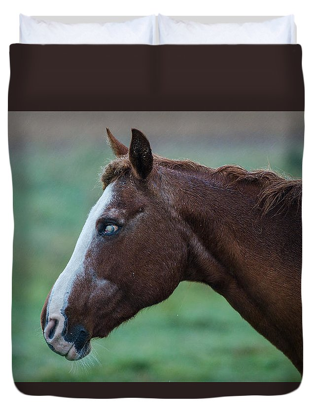 Horse Duvet Cover featuring the photograph Young Blind Horse In The Rain by Mario Croteau