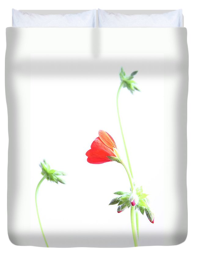 Geranium Duvet Cover featuring the photograph Young Geranium Fine Art Photography Print by James BO Insogna