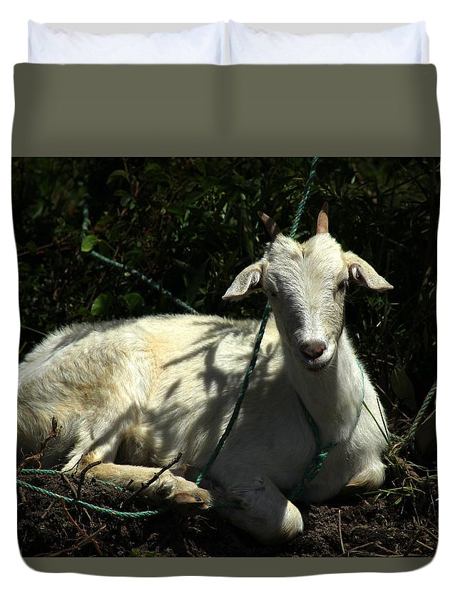 Goat Duvet Cover featuring the photograph Young Goat Next To A Bush by Robert Hamm
