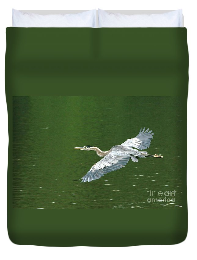 Landscape Nature Wildlife Bird Crane Heron Green Flight Ohio Water Duvet Cover featuring the photograph Young Great Blue Heron Taking Flight by Dawn Downour