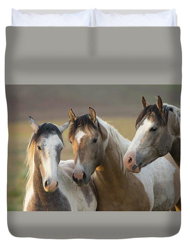 Horse Duvet Cover featuring the photograph Young Guns by Kent Keller
