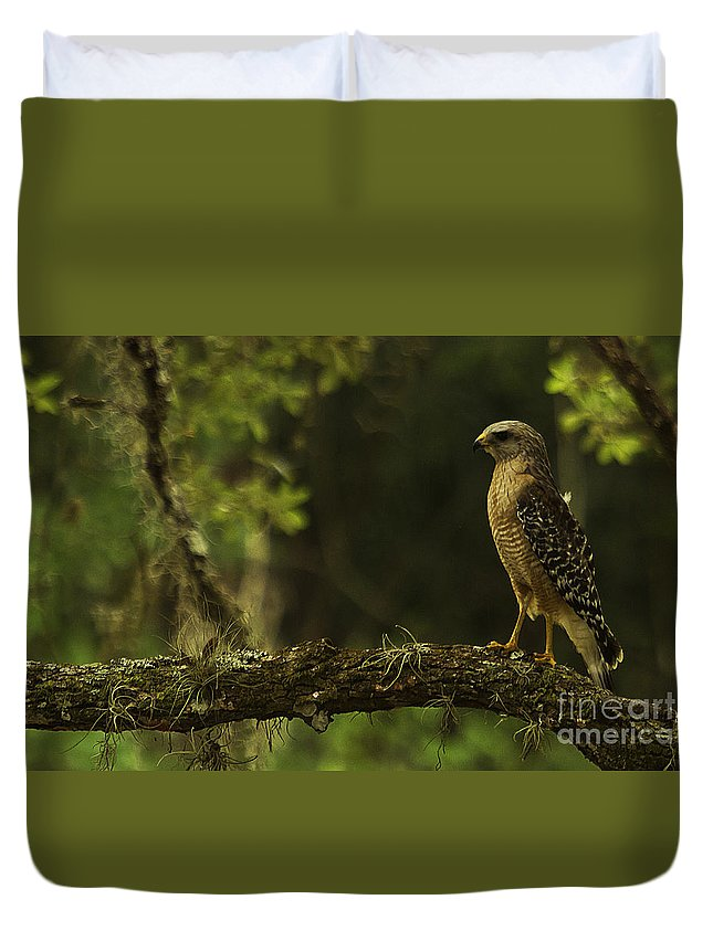 Hawk Duvet Cover featuring the photograph Young Hawk by Tress Chapin