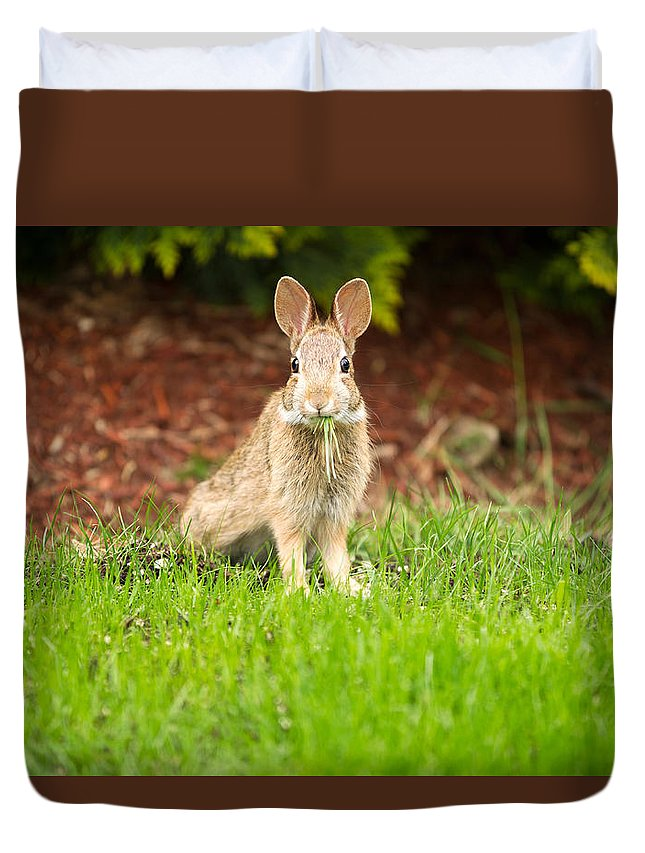 Rabbit Duvet Cover featuring the photograph Young Healthy Wild Rabbit Eating Fresh Grass From Yard by Thomas Baker