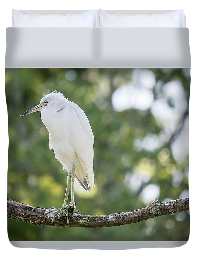 Little Blue Heron Duvet Cover featuring the photograph Young Little Blue Heron by David Ramage
