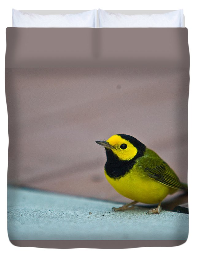 Cove Duvet Cover featuring the photograph Young Male Hooded Warbler 3 by Douglas Barnett
