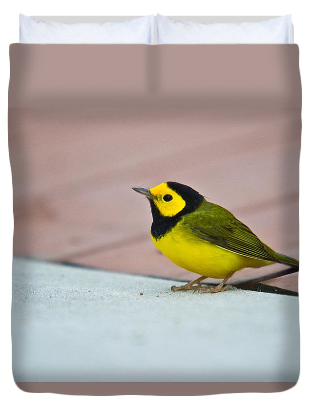 Cove Duvet Cover featuring the photograph Young Male Hooded Warbler 4 by Douglas Barnett