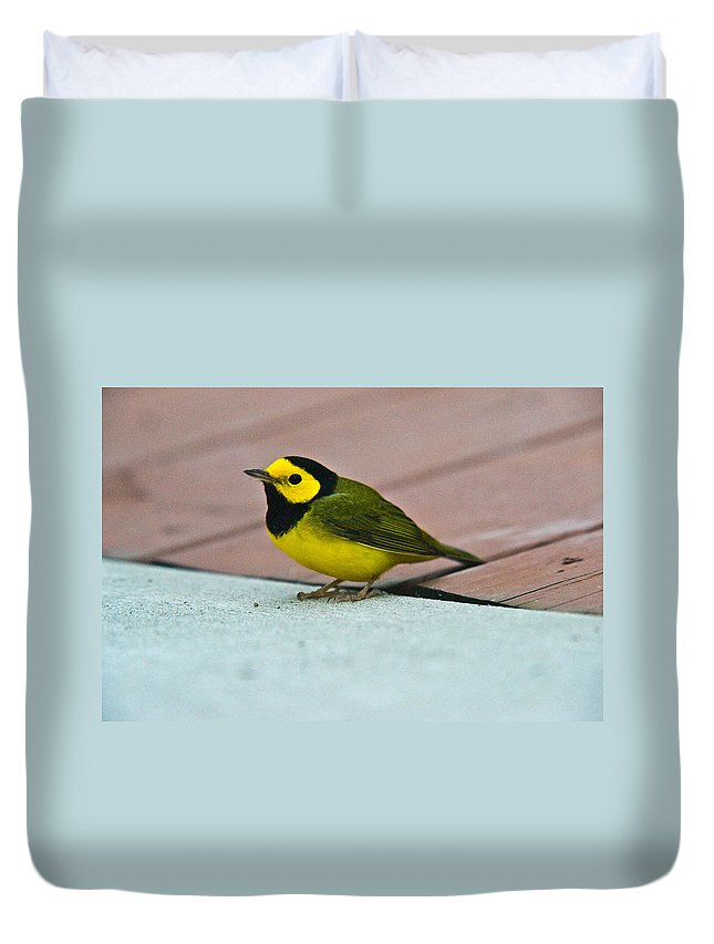 Cove Duvet Cover featuring the photograph Young Male Hooded Warbler 5 by Douglas Barnett