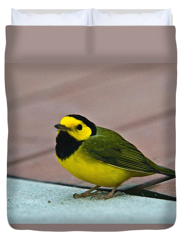 Cove Duvet Cover featuring the photograph Young Male Hooded Warbler 6 by Douglas Barnett