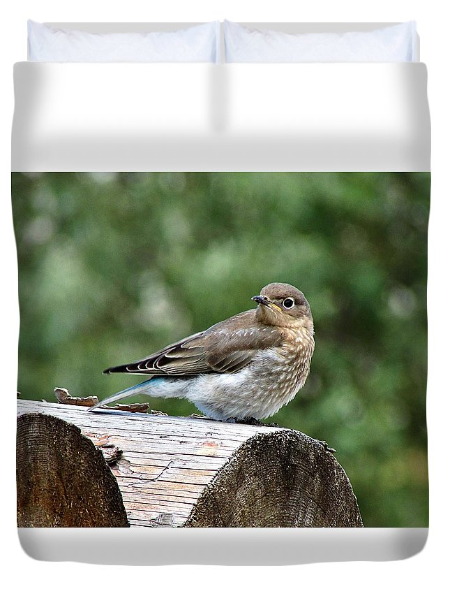 Bird Duvet Cover featuring the photograph Young Mountain Bluebird by Heather Tierney