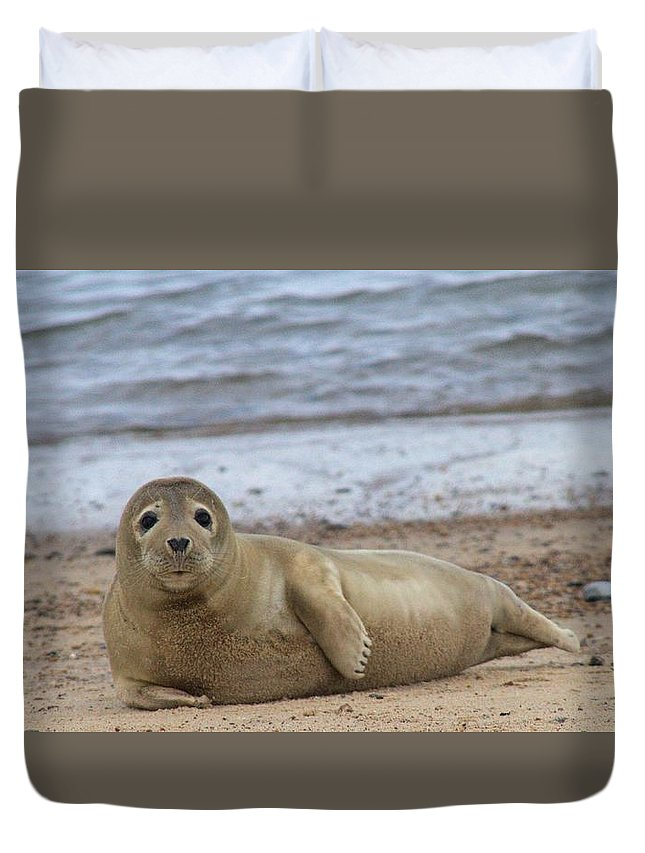 Seal Duvet Cover featuring the photograph Young Seal Pup On Beach - Horsey, Norfolk, Uk by Gordon Auld