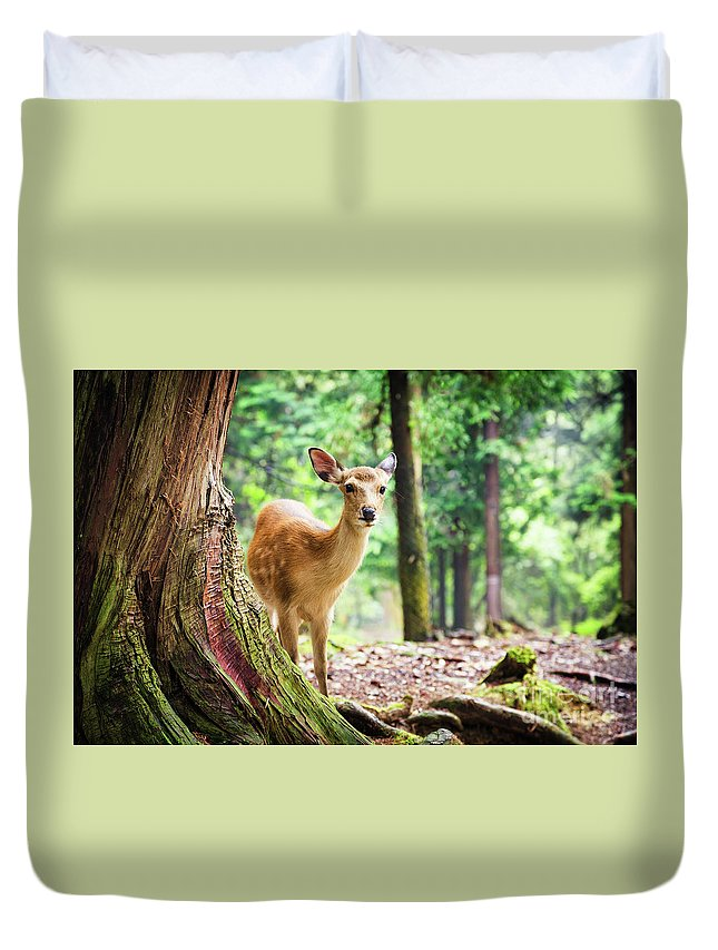 Nara Duvet Cover featuring the photograph Young Sika Deer In Nara Park by Jane Rix