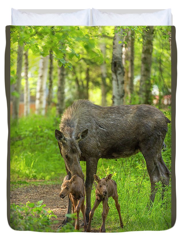 Alaska Duvet Cover featuring the photograph Young Twins by Tim Grams