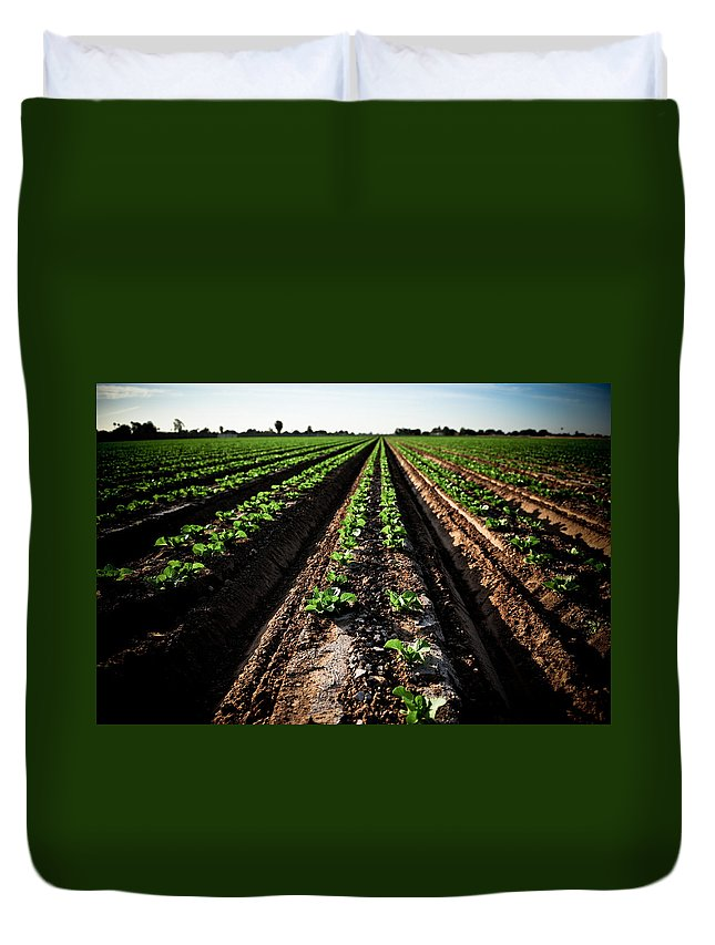 Lettuce Duvet Cover featuring the photograph Yuma Lettuce by Scott Sawyer