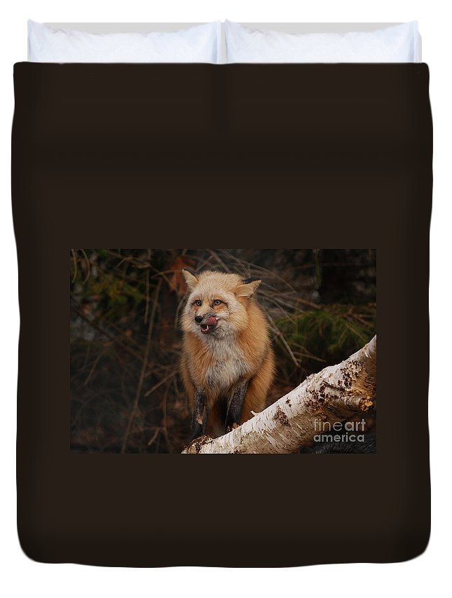 Fox Duvet Cover featuring the photograph Yummy by Lori Tambakis