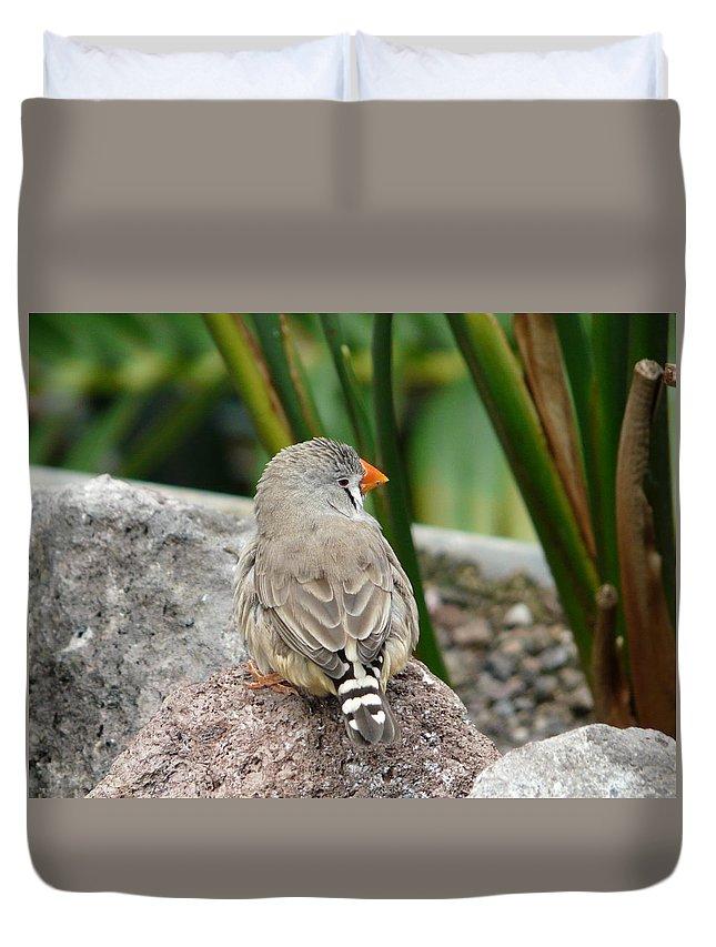 Bird Duvet Cover featuring the photograph Zebra Finch by Valerie Ornstein