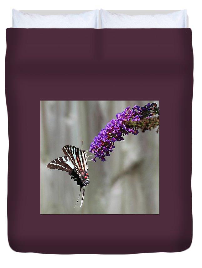 Zebra Swallowtail Butterfly 2 Duvet Cover featuring the photograph Zebra Swallowtail Butterfly 2 by Shannon Louder