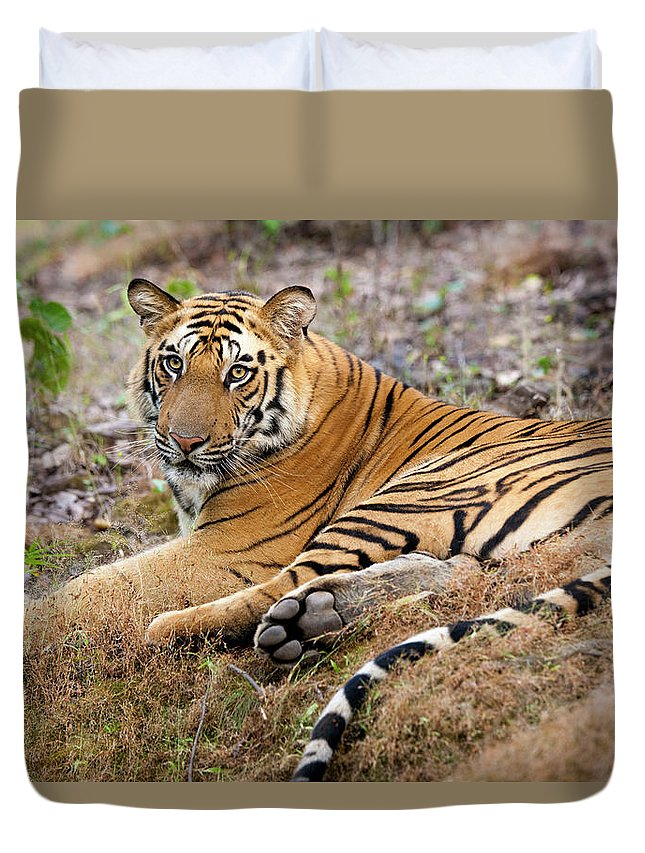 Looking Over Shoulder Duvet Cover featuring the photograph An Adult Tiger In Bandhavgarh National by Mint Images - Art Wolfe